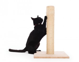 Scratching serves many purposes for the cat, including grooming their claws, stretching and also marking their territory.