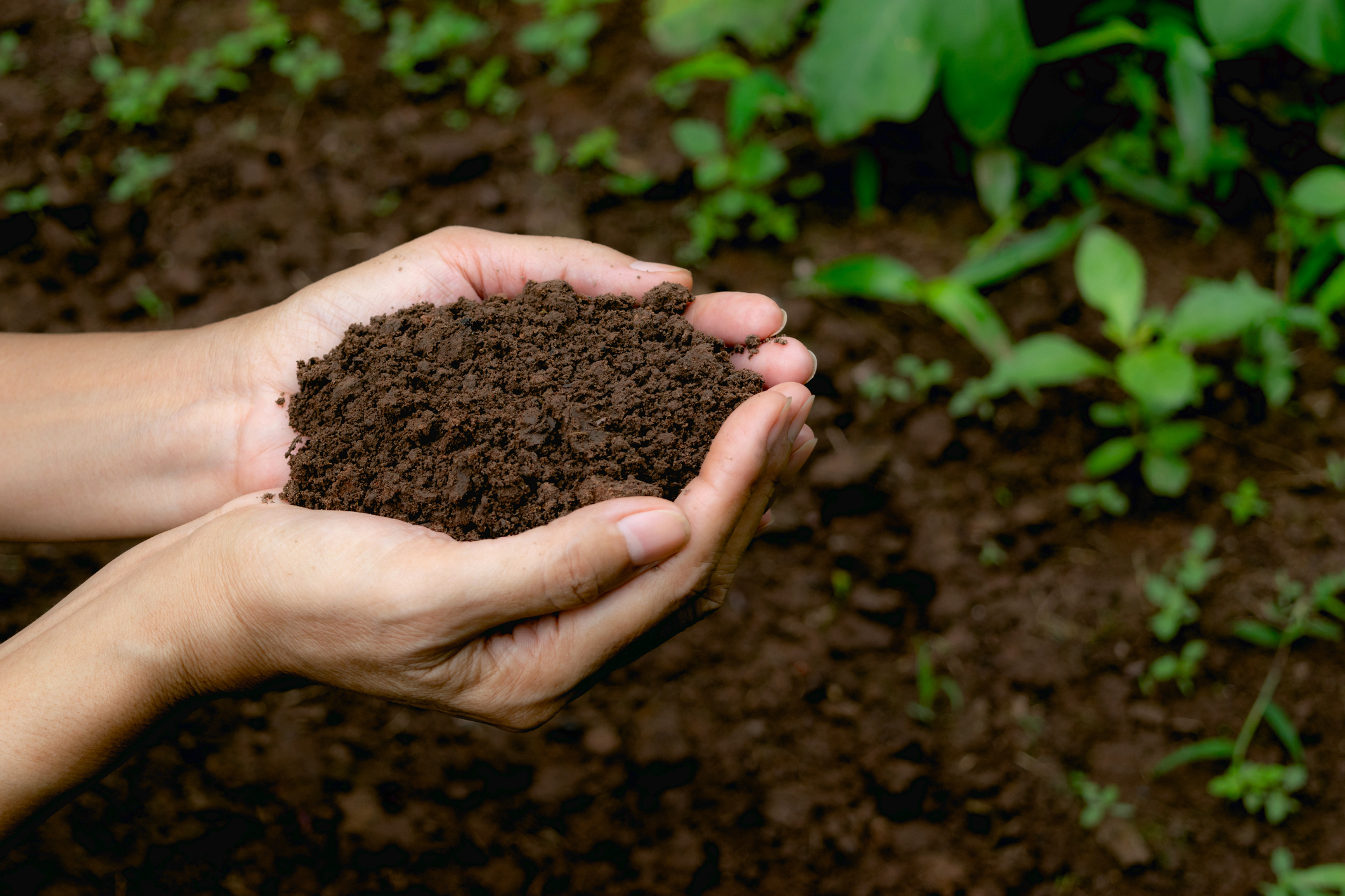 hand holding fertile soil